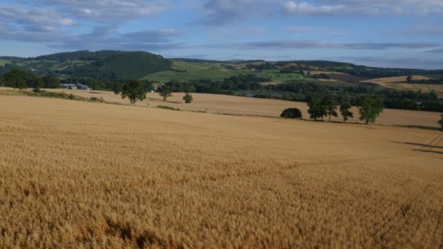 vídeos y material grabado en eventos de stock de aerial over ripe wheat crop in field, uk - trigo