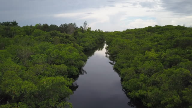 vídeos de stock, filmes e b-roll de aerial over river in everglades - north america