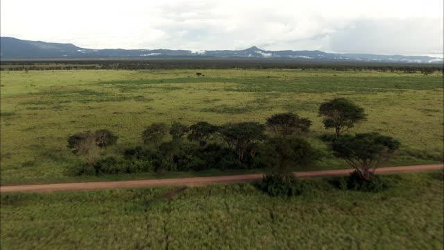 aerial over savannah and acacia trees, uganda - ウガンダ点の映像素材/bロール