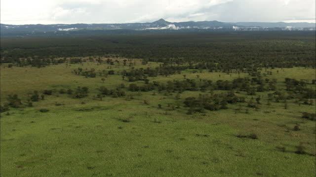 Aerial over savannah and Acacia woodland, Uganda
