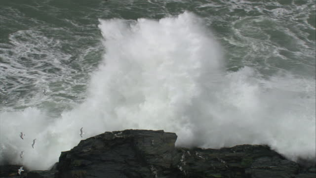 aerial over stormy sea crashing against rocky islet, cornwall, uk - large group of animals stock videos & royalty-free footage