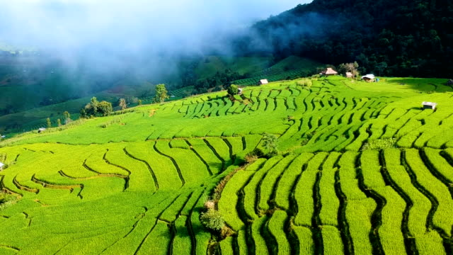 aerial over terraced rice paddies at morning in thailand - rice paddy stock videos and b-roll footage