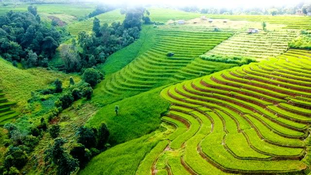 vidéos et rushes de aérienne au-dessus des rizières en terrasses au matin en thaïlande - rizière