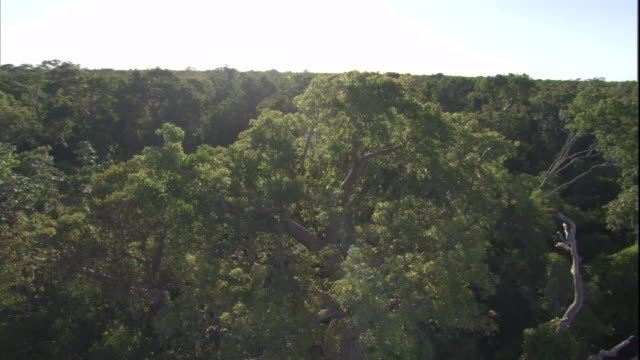 aerial over the canopy of a dense forest in madagascar. available in hd. - madagaskar stock-videos und b-roll-filmmaterial