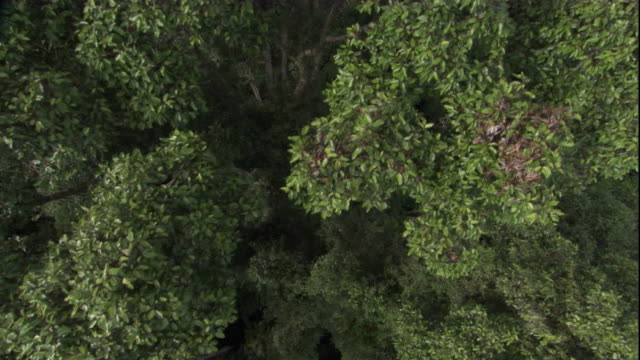 aerial over the rainforest canopy, borneo. available in hd. - borneo stock-videos und b-roll-filmmaterial