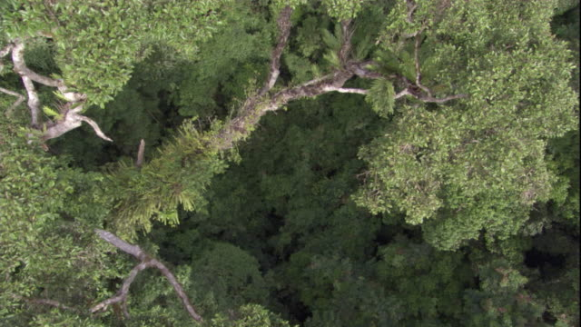 aerial over the rainforest canopy, borneo. available in hd. - rainforest stock videos & royalty-free footage