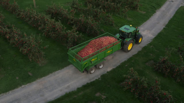 aerial over tractor towing apple crop in orchard, uk - tractor stock videos & royalty-free footage