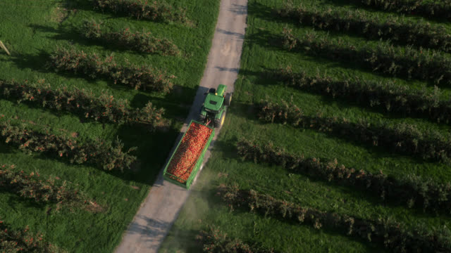 aerial over tractor towing apple crop in orchard, uk - apple fruit stock videos & royalty-free footage
