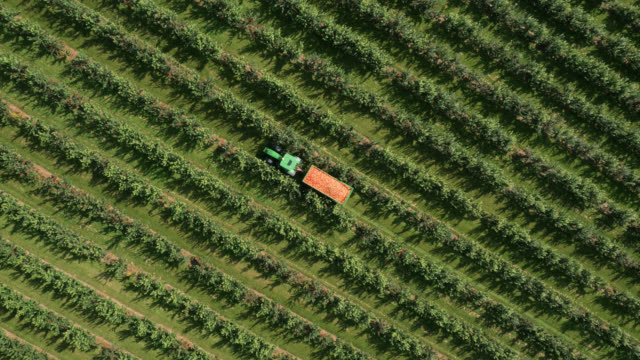 tl aerial over tractor towing apple crop, uk - apple fruit stock videos & royalty-free footage
