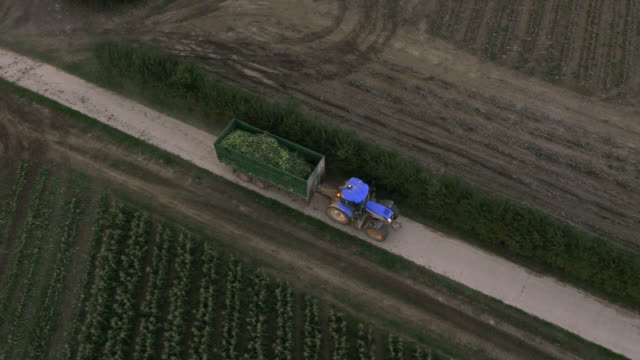 stockvideo's en b-roll-footage met aerial over tractor towing sweetcorn on farm, uk - cereal plant