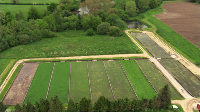 vídeos de stock e filmes b-roll de aerial over traditional watercress (nasturtium officinale) beds, hampshire , uk - hampshire