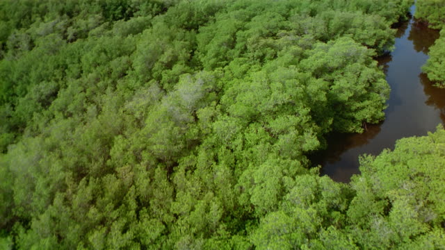 Aerial over trees and water in swamp area / Venezuela
