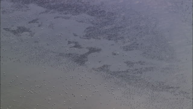aerial over wading birds foraging on tidal mudflats, norfolk, uk - foraging stock videos and b-roll footage