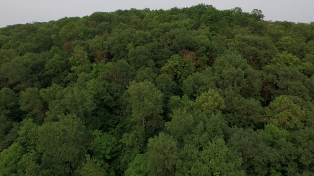 Aerial over WI forest