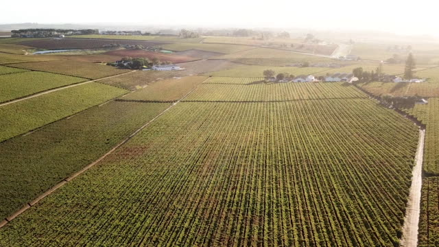 aerial overhead a vineyard in a valley - paarl stock videos & royalty-free footage