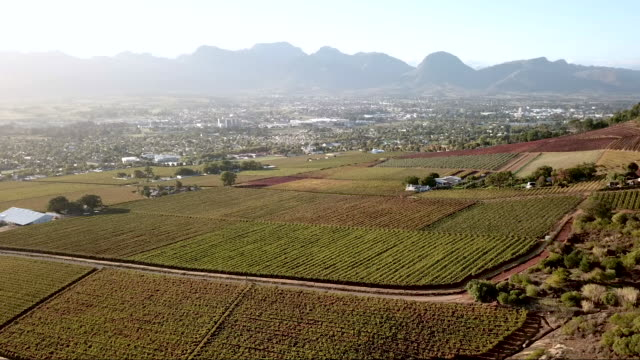 Aerial overhead a vineyard in a valley