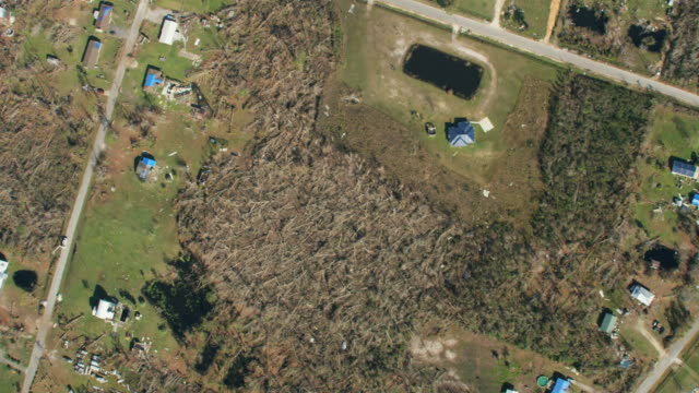 Aerial overhead aftermath hurricane damaged trees and property