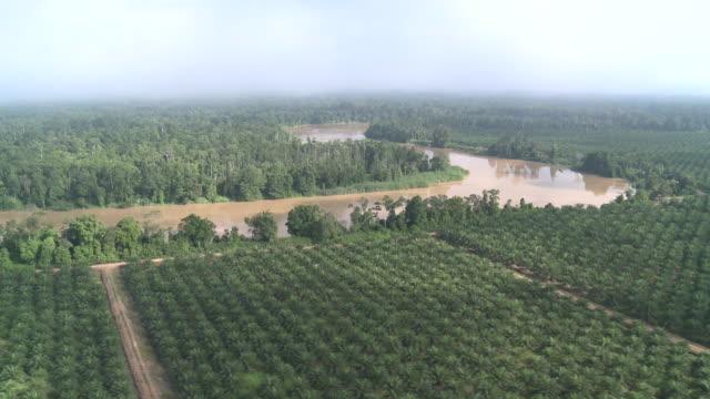 Aerial palm oil plantation and jungle, Maliau Basin, Sabah, Malaysia, Borneo