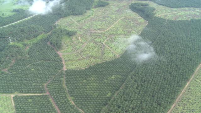 vidéos et rushes de aerial palm oil plantation, maliau basin, sabah, malaysia, borneo - démoli