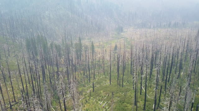 Aerial: Pan Down of Fire Damaged Forest