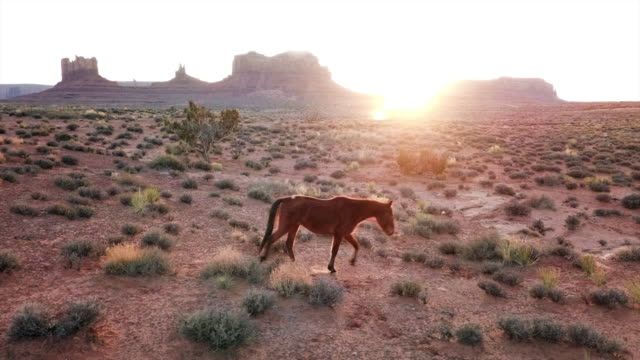 aerial pan left to right: horse running stopping in the desert - june stock videos & royalty-free footage