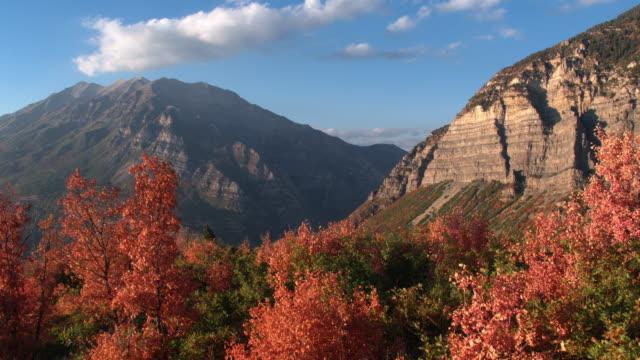 aerial pan of colorful tree tops in fall - プロボ点の映像素材/bロール
