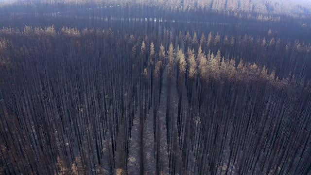 vídeos de stock e filmes b-roll de aerial pan right to left: burned trees by bush fire still standing - melbourne, australia - cinza