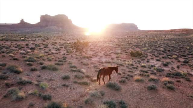 aerial pan right to left: horse and the beautiful sunset of monument valley - june stock videos & royalty-free footage