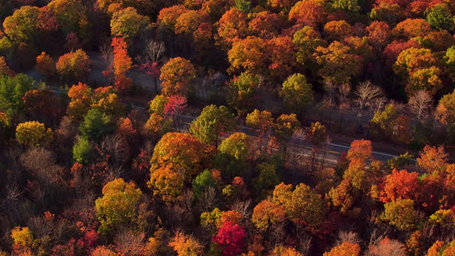Aerial pan up from looking directly down on mountains, Beautiful leaf colors on trees