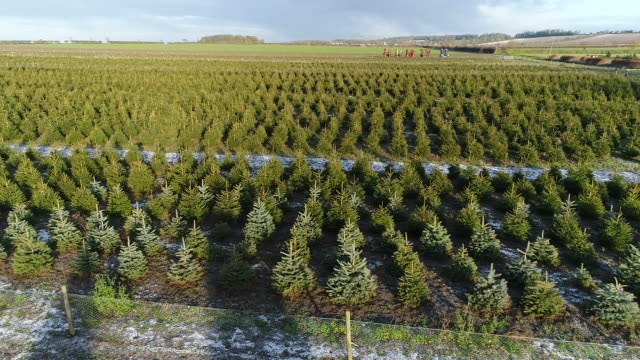 aerial panning shot of christmas trees in fillingham - christmas tree stock videos & royalty-free footage