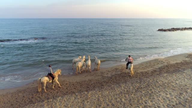 aerial: panning shot of dancer walking by horses and wranglers at sea shore during sunset - camargue, france - camargue stock-videos und b-roll-filmmaterial