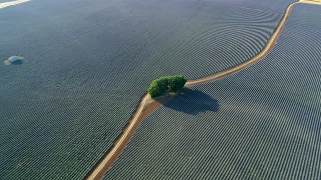 vidéos et rushes de aerial panning shot of green trees by road on field during sunny day, drone flying over rural landscape - valensole provence, france - violet