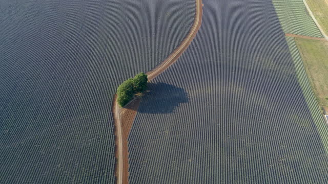 vidéos et rushes de aerial panning shot of green trees by road on lavender field, drone ascending over rural landscape on sunny day - valensole provence, france - violet