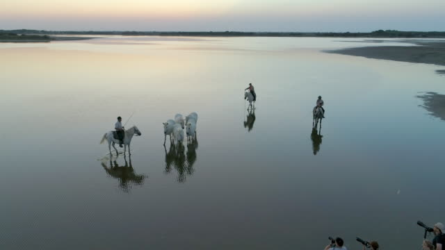 aerial panning shot of men with horses at beautiful sea during sunset - camargue, france - walking in water stock videos & royalty-free footage