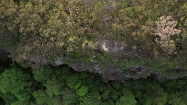 aerial panning shot of tourists amidst trees on rocky cliff in forest, drone flying forward over springbrook national park - rock stock videos & royalty-free footage