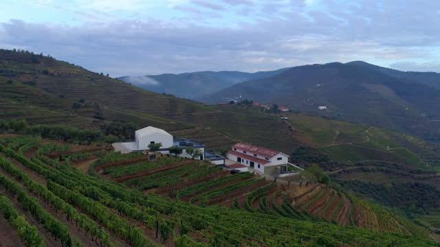 vídeos de stock e filmes b-roll de aerial panning shot of winery structure amidst vineyard over mountains against cloudy sky - porto, portugal - cena não urbana