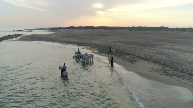 aerial: panning shot of woman dancing by wranglers and horses at beach during sunset, drone is flying over sea - camargue, france - mediterranean culture stock videos & royalty-free footage