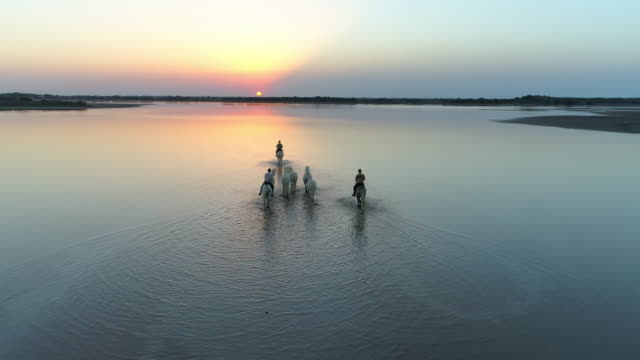 aerial panning shot of wranglers with horses wading in ocean against sky during sunset - camargue, france - walking in water stock videos & royalty-free footage