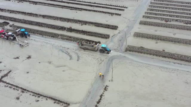 aerial panning shot showing tractors operating in an oyster farm, cancale, france - ミヤコドリ点の映像素材/bロール