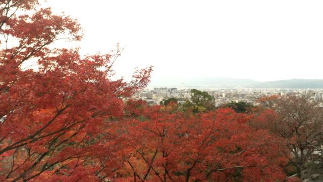 航空写真ビューをパン: 東の京都市