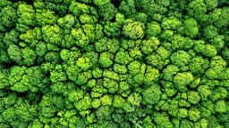 Aerial panoramic video from drone in FullHD, a bird's eye view to the forest with green trees and bushes. Panoramic slow video forward movement