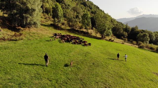 Aerial, people herd goats in Spain countryside