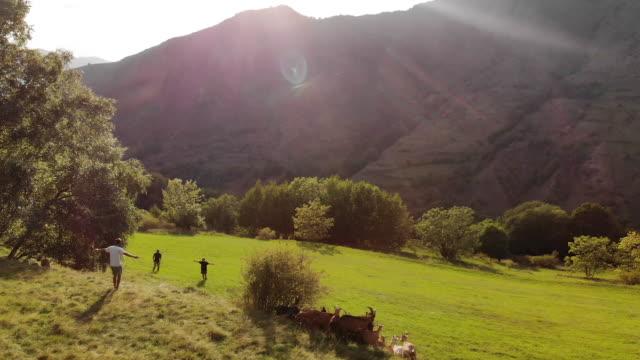 Aerial, people herd goats in Spain