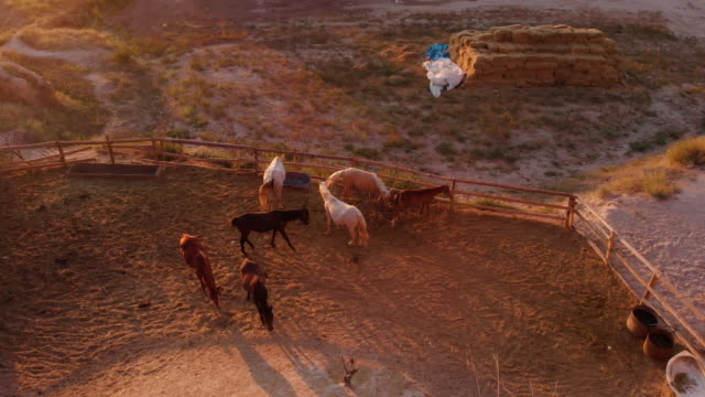 aerial perspective of desert horse corral, set in iconic landscape at sunrise - medium group of animals stock videos & royalty-free footage