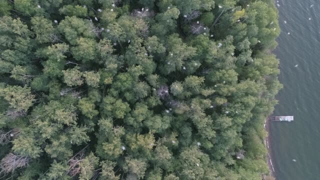 aerial perspective of lakeshore bird activity - lakeshore stock videos & royalty-free footage