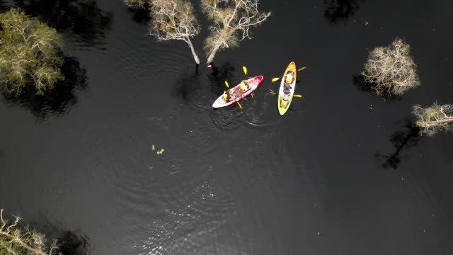 aerial photo drone. asian man and woman kayaking together in mangrove river on a sunny day . - kayaking stock videos & royalty-free footage
