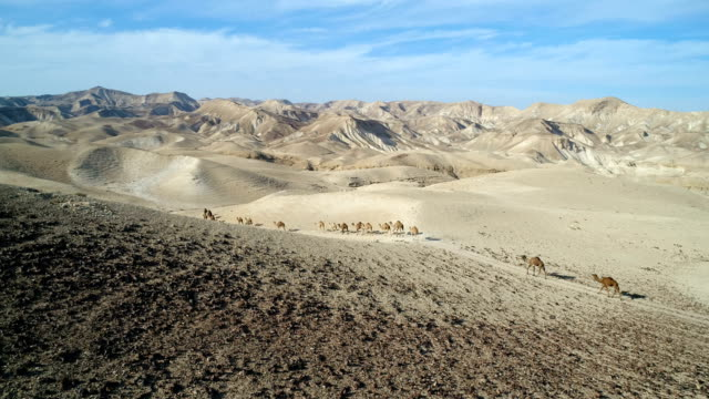 aerial photography- camels in the desert - camel train stock videos & royalty-free footage