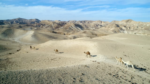 Aerial photography- Camels in the desert