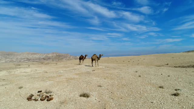 aerial photography- camels in the desert - dead sea stock videos and b-roll footage