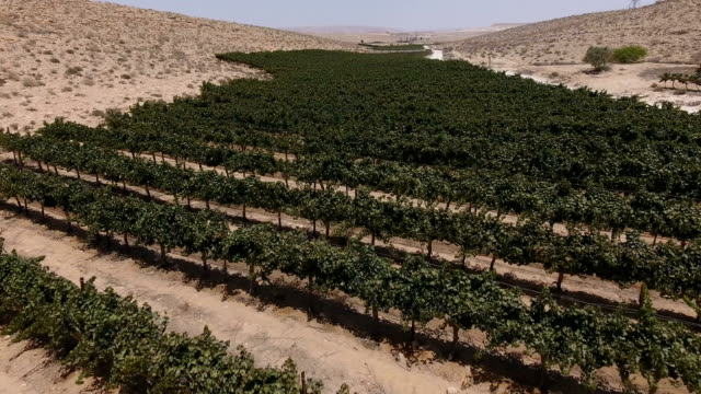 Aerial photography of Avdat Vineyards
